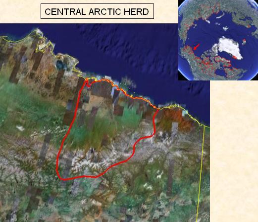 CentralArctic