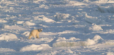 Photo: Wild Arctic Pictures/shutterstock.com