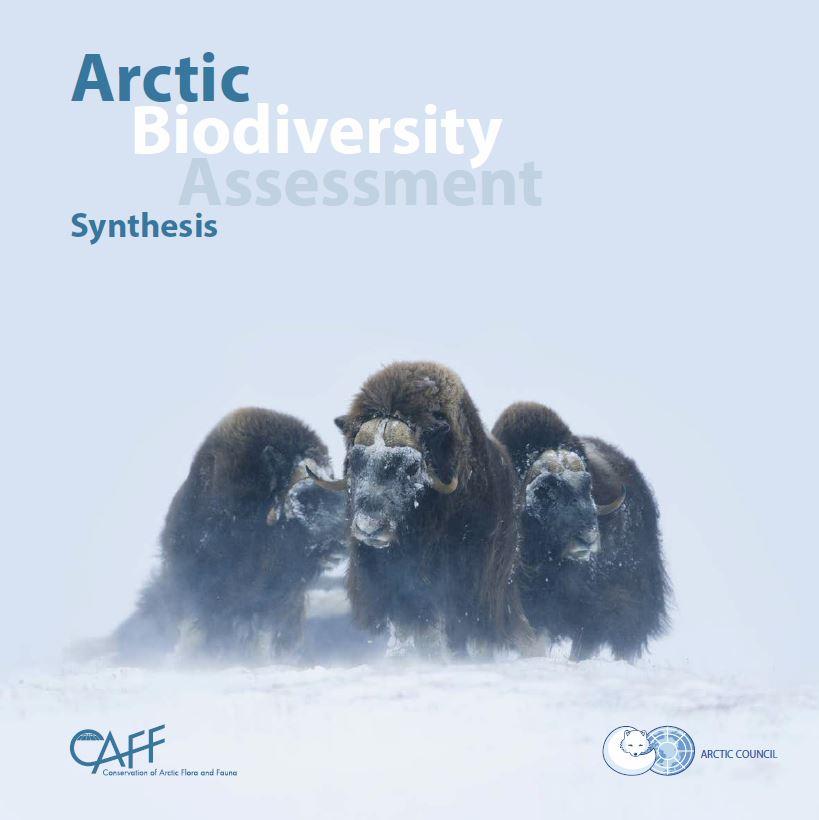 Arctic Biodiversity Assessment: Synthesis. Photo: Lars Holst Hansen/ARC-PIC.com
